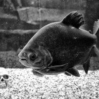 Рыба и череп :: Михаил Вайсман