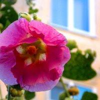 Капельки воды на цветке. Автор Саша. :: Фотогруппа Весна.