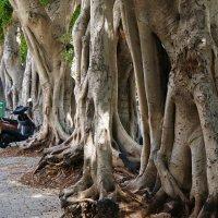 необычные деревья :: evgeni vaizer