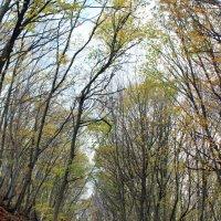 Крымский лес :: Виктория Виноградова