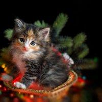 Предновогоднее с котятами :) :: Людмила Манохина
