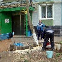 Было дерево... :: Нина Корешкова