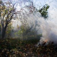 Осенних листьев дым. :: Александр Крупский