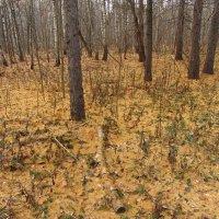 Изучаю новое для меня место в парке - IMG_3494 :: Андрей Лукьянов