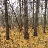 Мой парк в октябре - IMG_3495 :: Андрей Лукьянов