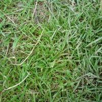 Осенняя трава :: Дмитрий Соколов