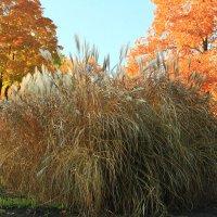 Золотая осень. Тростник :: Gennadiy Karasev