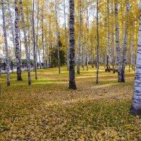 Осень :: Михаил Рехметов