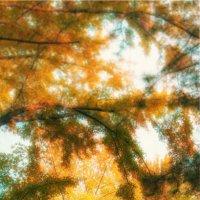 Осення набережная Симферополя :: Солнечная Лисичка =Дашка Скугарева