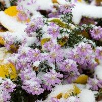 первый снег :: Денис Сидельников
