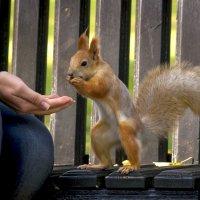 По-белкиному веленью - появись в руке гора орехов! :: Евгений Лимонтов