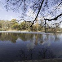 Останкинский парк - Ботанический сад. :: Александр Аксёнов