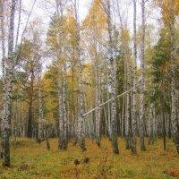 """Из темы """" В лесу"""" :: Мила Бовкун"""