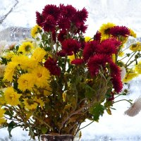 Поздние цветы... :: galina tihonova