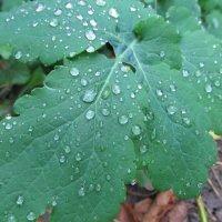 Листок после дождя :: Яна Чепик