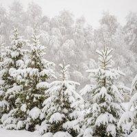 Сибирь.Зима.Начало. :: Татьяна Степанова