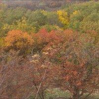 Осенняя палитра :: Нина Корешкова