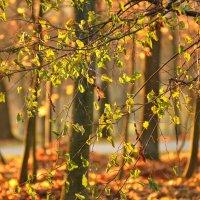 Осенний блюз :: Maks :))