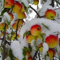 Зима нечаянно нагрянет...... :: Маргарита ( Марта ) Дрожжина