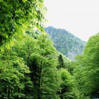 Горы Абхазии. Бзыбский хребет :: Елена Павлова (Смолова)