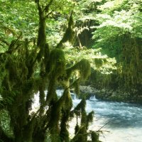 В окружении сказочного самшитового леса расположено форелевое хозяйство :: Елена Смолова
