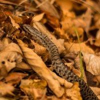 Осенний хищник :: Anton Tolstonogov