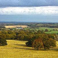 Petworth Park - England :: Ivars RuSto