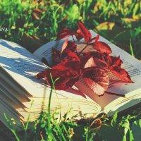 Чудесный мир книг.... :: Мадина Девеева