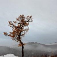 Одиночество :: Владимир Петухов