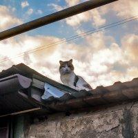 Кот на крыше :: Сергей Черепанов