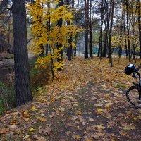 Осенняя прогулка :: Nikanor