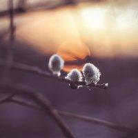 Все тянутся к солнцу :: Oksana Sansnom