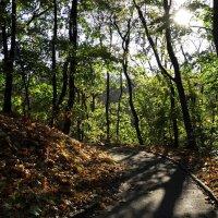 Осень в Университетском бот.саду Фото№1 :: Владимир Бровко