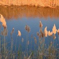 Осень на  реке. :: Марина
