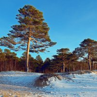 Северодвинск. Сосновый бор на берегу Белого моря :: Владимир Шибинский