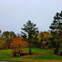 Осень :: Владимир Фомин