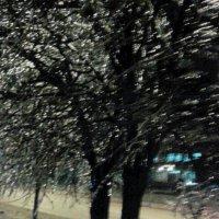 Стеклянные деревья :: Наталья Дмитриева