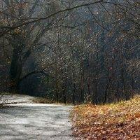 листья опали :: Геннадий Свистов