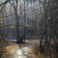 призрак осени :: Геннадий Свистов