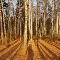 Просто осень пришла. :: Ирина Нафаня