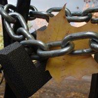 осень в затворе :: Евгения Куприянова