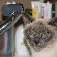 Кошачий портрет :: Владимир Дмитриев