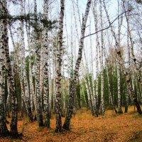 На лесной полянке. :: Мила Бовкун