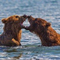 Медвежье сердце :: Денис Будьков