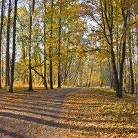 Осень :: Татьяна Панчешная