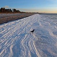 Северодвинск. Умная ворона созерцает замерзающее море во время отлива на закате :: Владимир Шибинский
