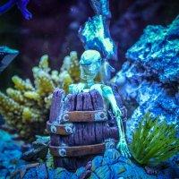 аквариум :: Наталья Чуфистова