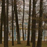 Прозрачный парк. Предзимье. :: Александр Петров