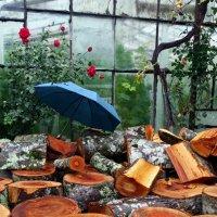 Натюрморт с зонтиком :: Наталья Джикидзе (Берёзина)