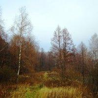 Осенняя тишина :: Андрей Снегерёв